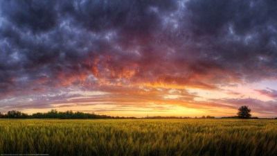 landscape, Field, Evening Wallpapers HD / Desktop and ...
