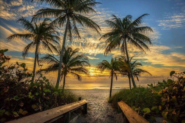 Nature Landscape Beach Palm Trees Sky Clouds Sand