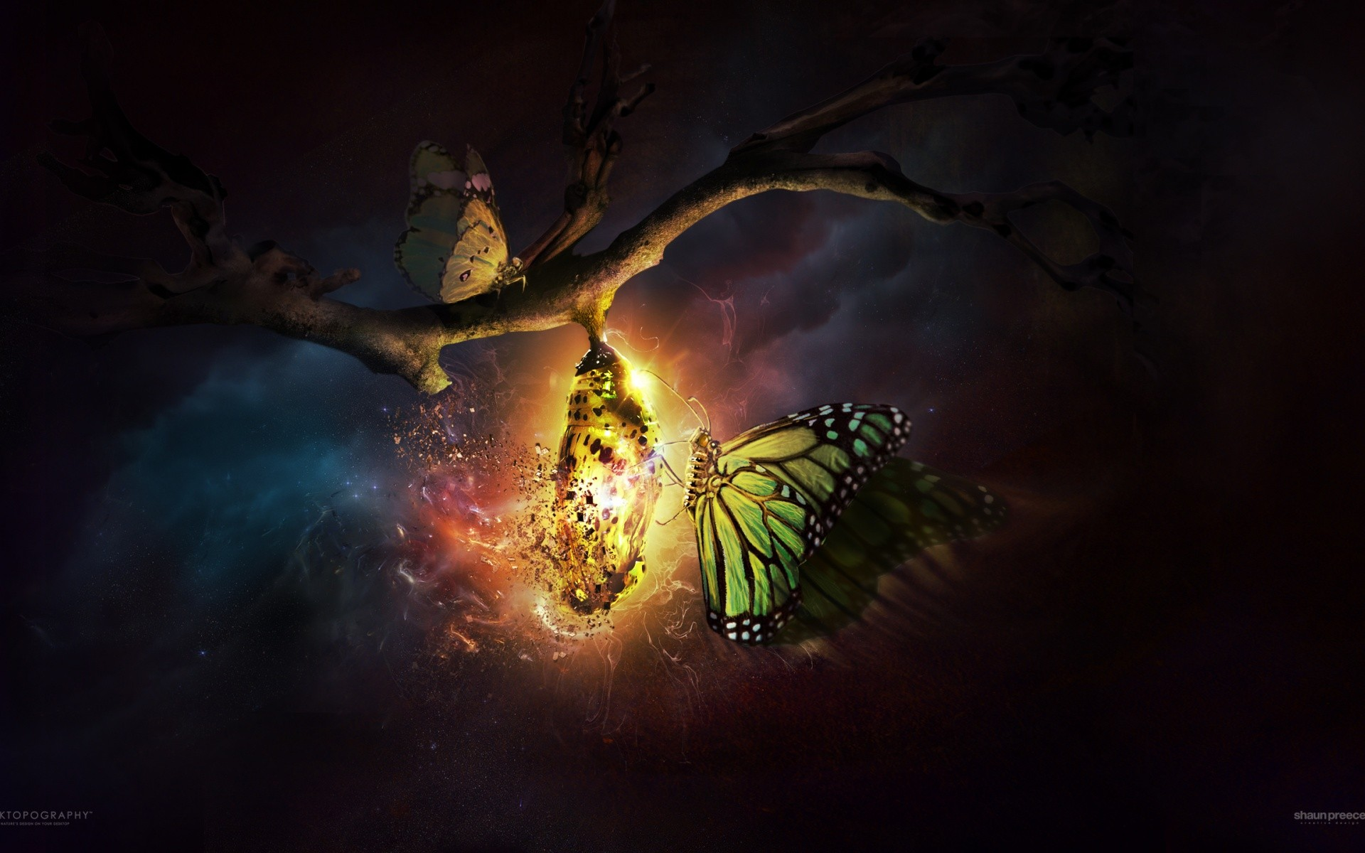 Desktopography Butterfly Cocoon Night Nature Cgi
