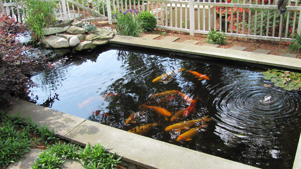 Small Patio Fish Ponds