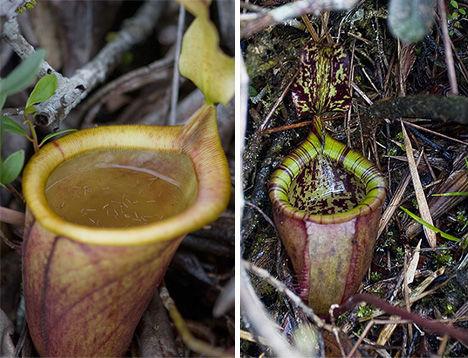 7 Carnivorous Wonders of the Plant World - WebEcoist