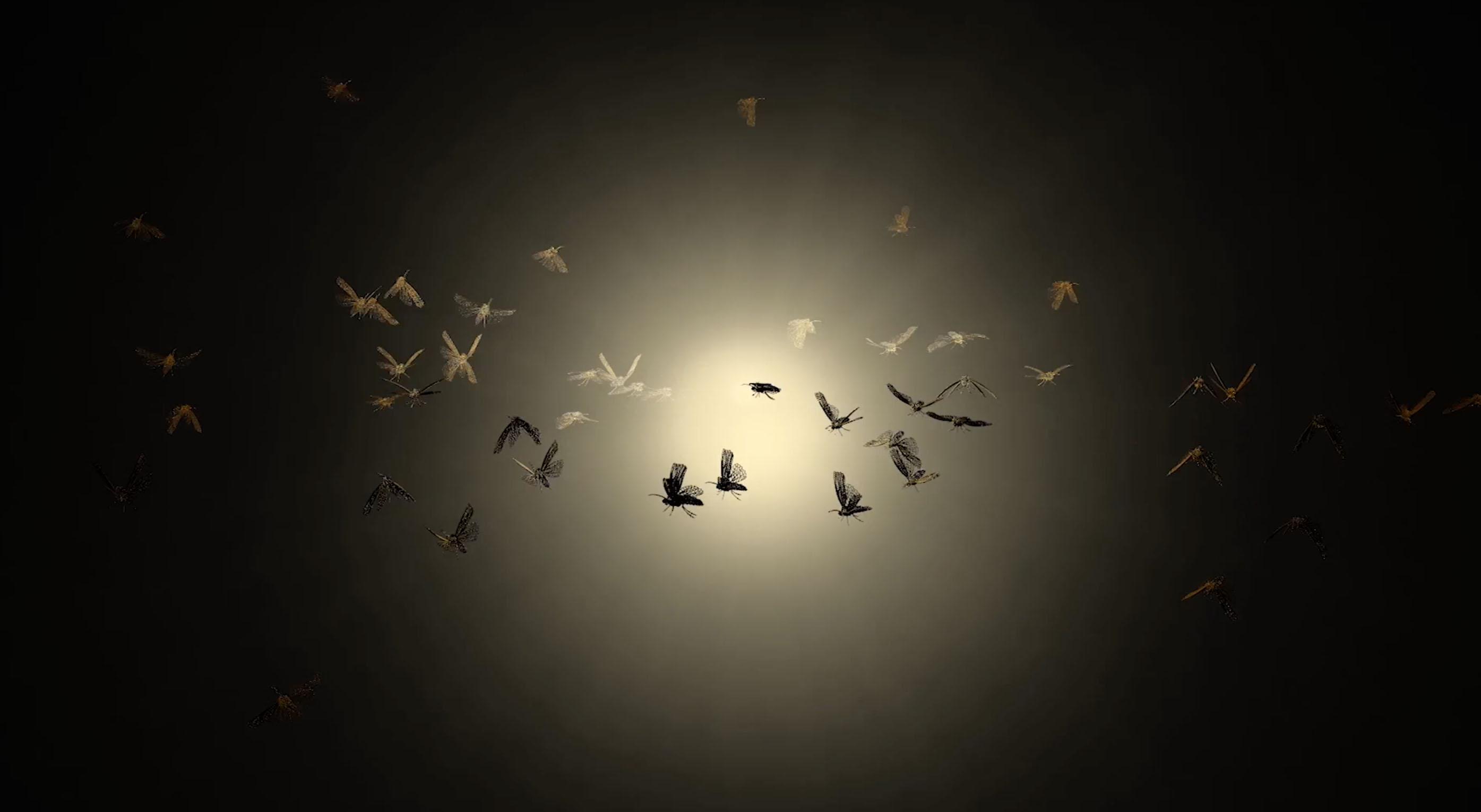 Moths Light Bulb