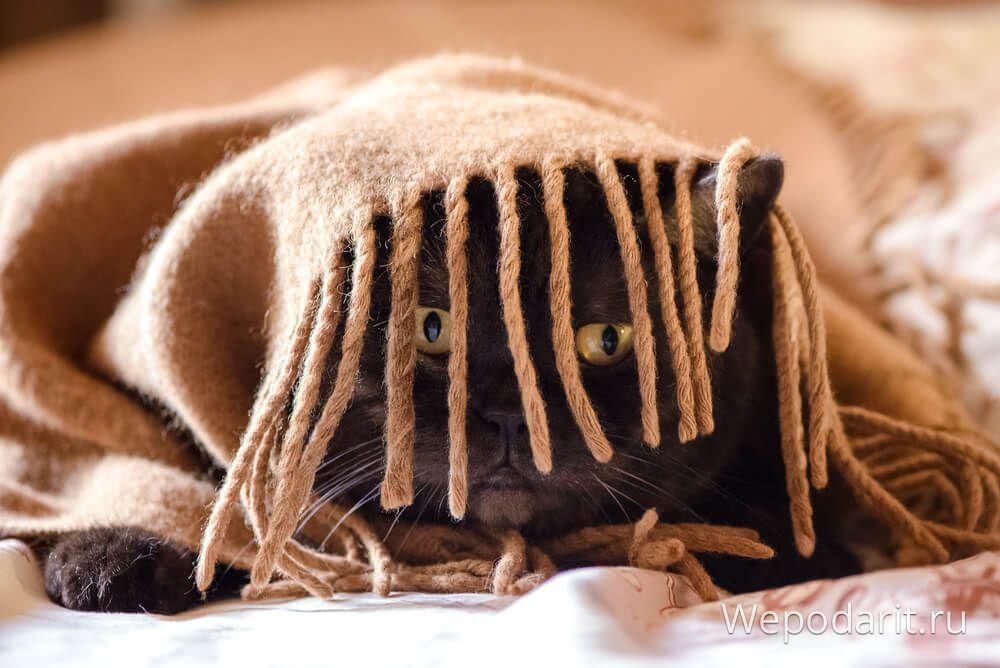 Yatak örtüsü altında komik kedi