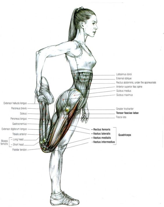 Stretch Lateralis Vastus