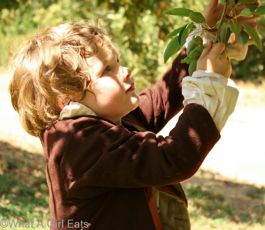 Apple Picking At Riley's Farm
