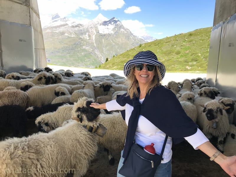 girl with black nosed sheep
