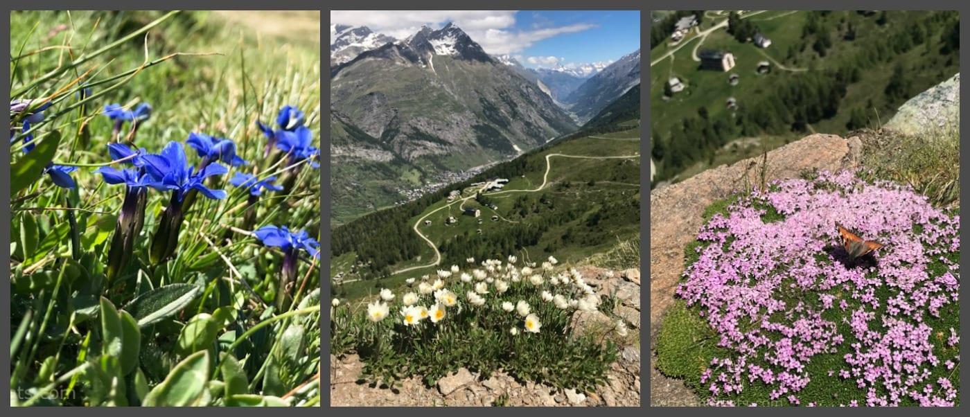 Swiss flora