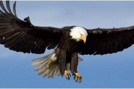 United States National Bird 4k Pictures 4k Pictures Full Hq