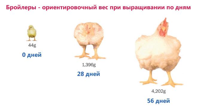 păsări vizează pierderea în greutate)