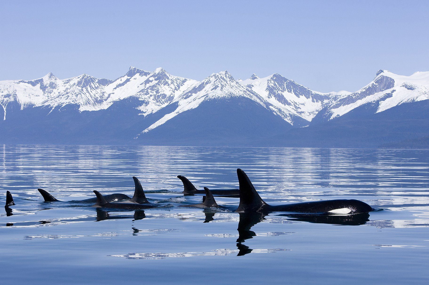 New The Best Of Alaska By Boat Top 10 Alaska Cruise Tips On This Month