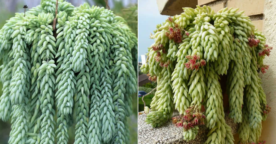 Unusual Succulent Plants