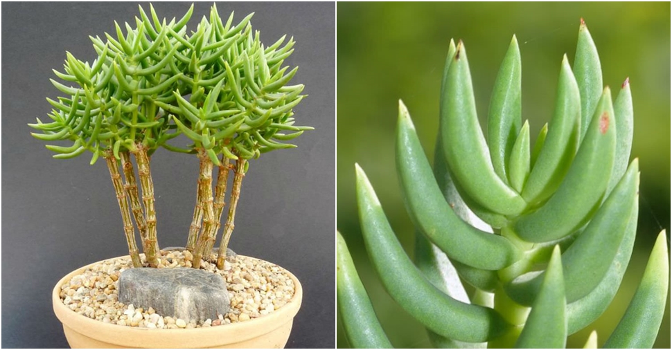 Mini Succulent Plants Bulk