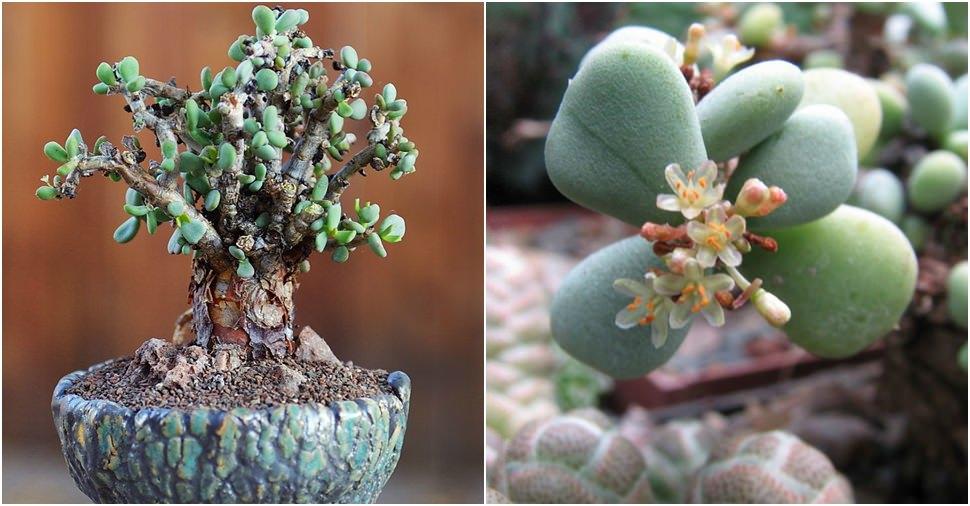 Long Succulent Plant