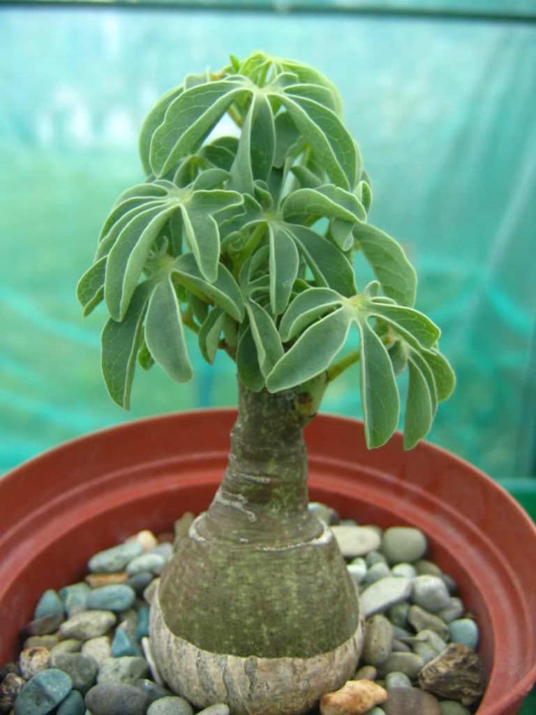 Succulent Plants Seeds