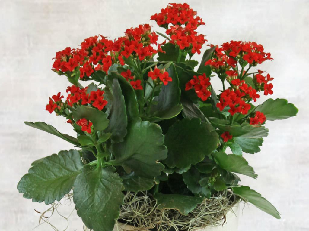 Indoor Plants Light