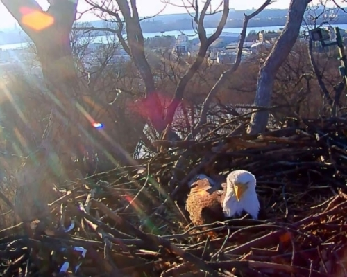 DC eaglet watch: 1 egg spotted; up to 2 more possible | WTOP DC eaglet watch: 1 egg spotted; up to 2 more possible