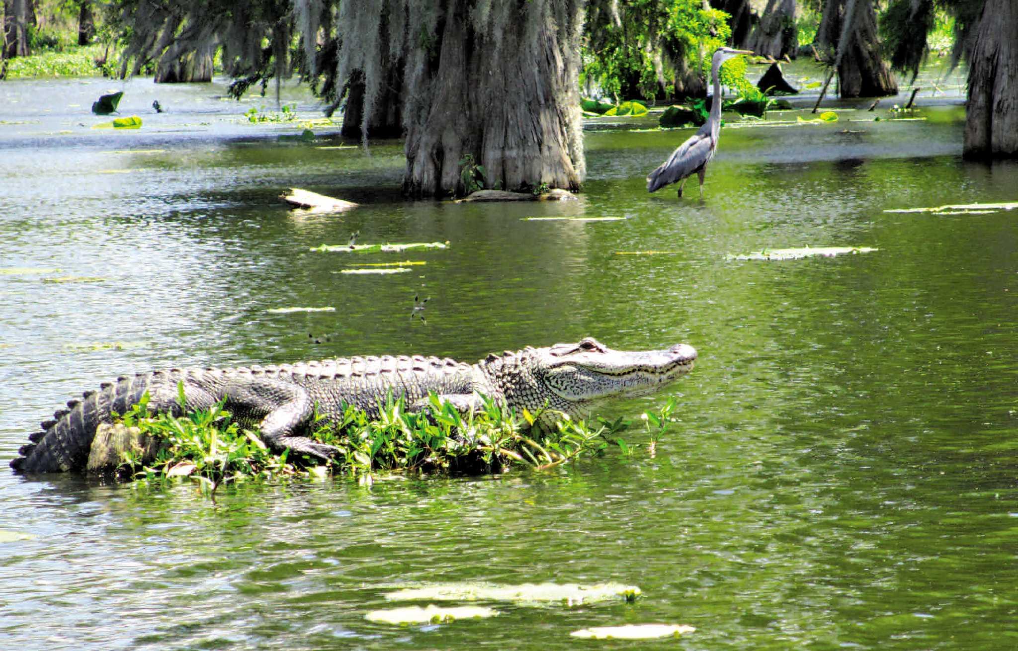 Louisiana Swamp Tour San Antonio Express News