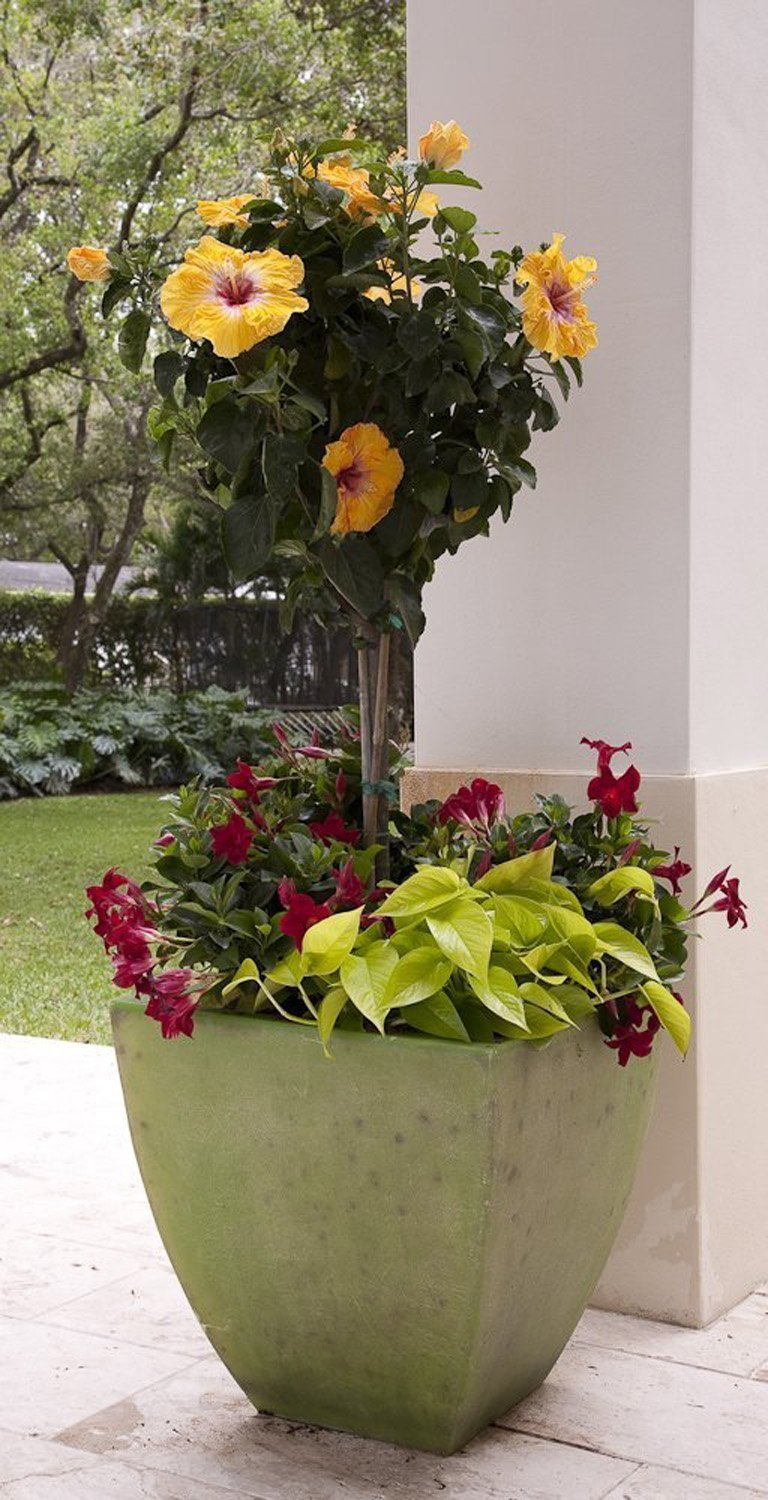 Native Texas Plants Container