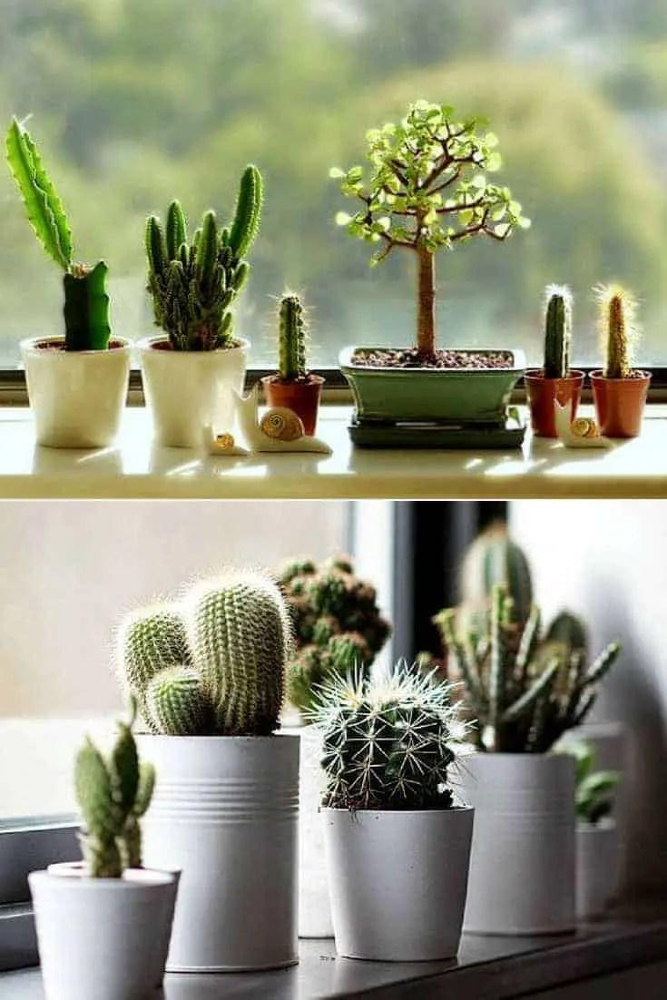 Create Your Windowsill Cactus Collection 1001 Gardens
