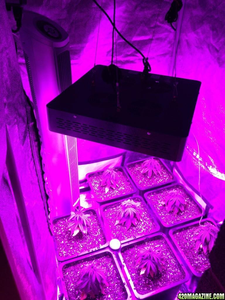 Make Led Grow Light