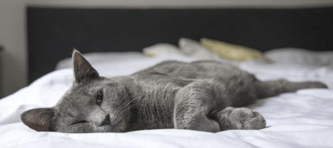 Can Cat Fleas Get Humans
