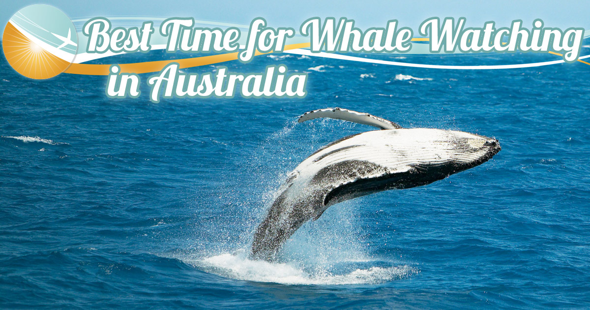 Islands Australia Honeymoon