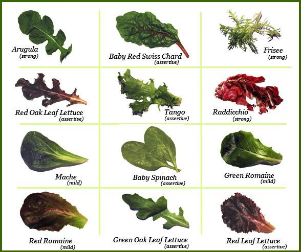 Kinds Succulent Plants