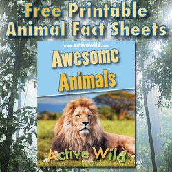 Image of: Interesting Facts Free Printable Animal Fact Sheets Pdf Wikipedia Rainforest Animals List With Pictures Facts Links To Further
