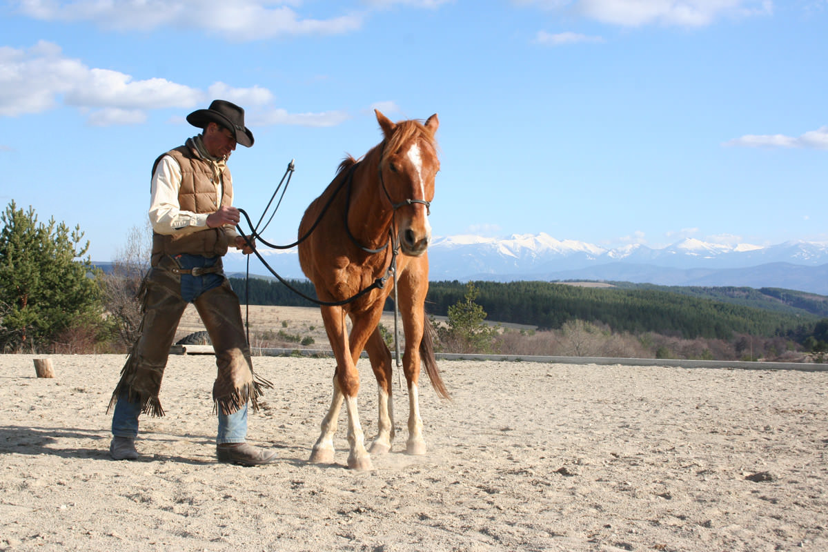 groundwork horses - HD1200×800