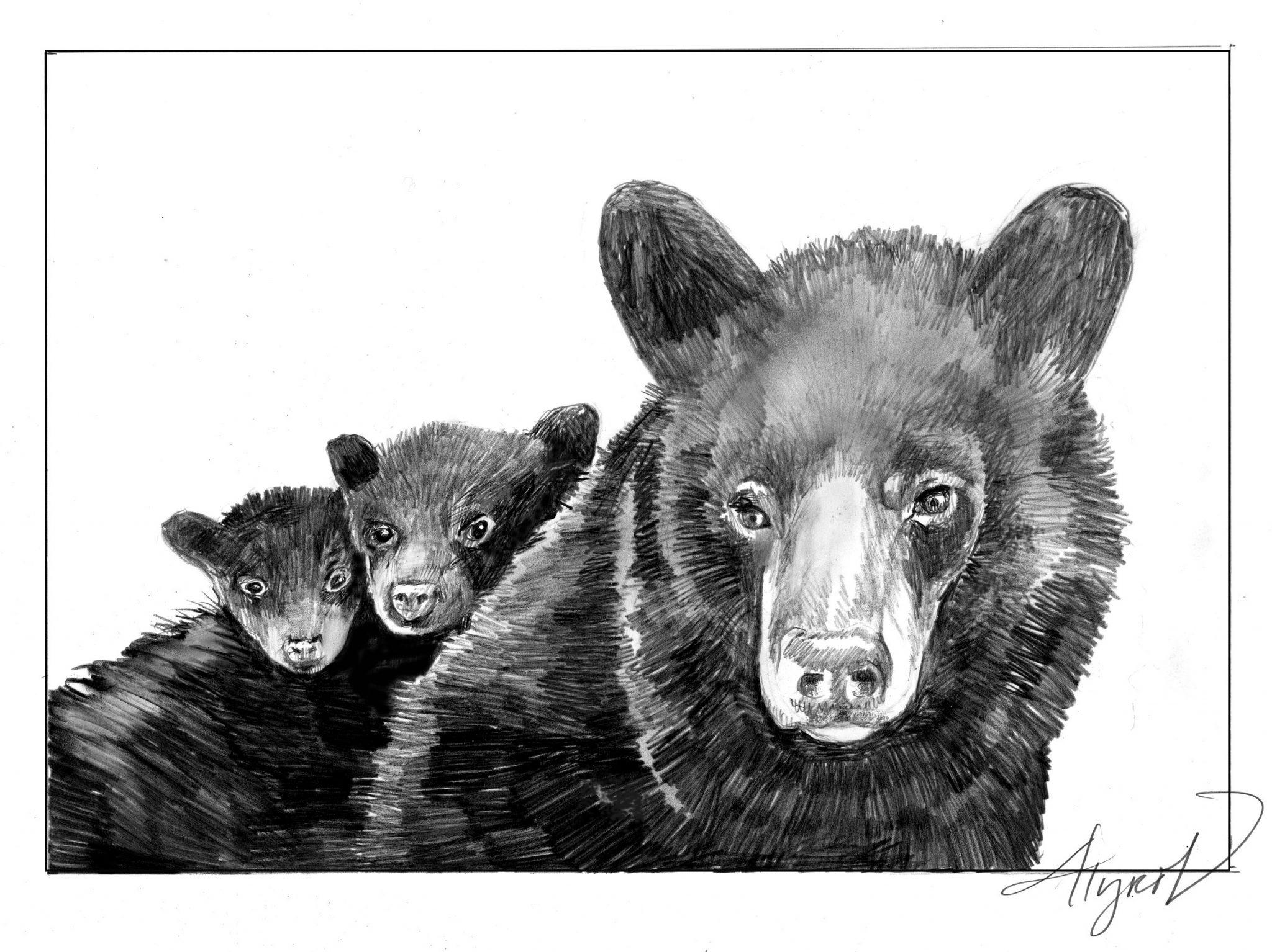 "Tag Archive for ""Black Bears"" - The Adirondack Almanack ..."