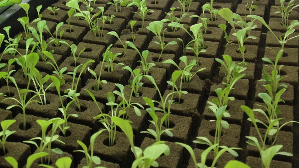 Advanced Nutrients Plants