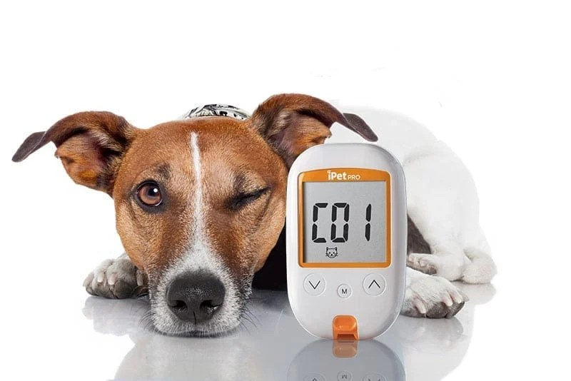 Best Glucose Meter Dogs