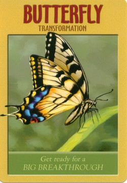 Power Animal Oracle Reviews Amp Images Aeclectic Tarot