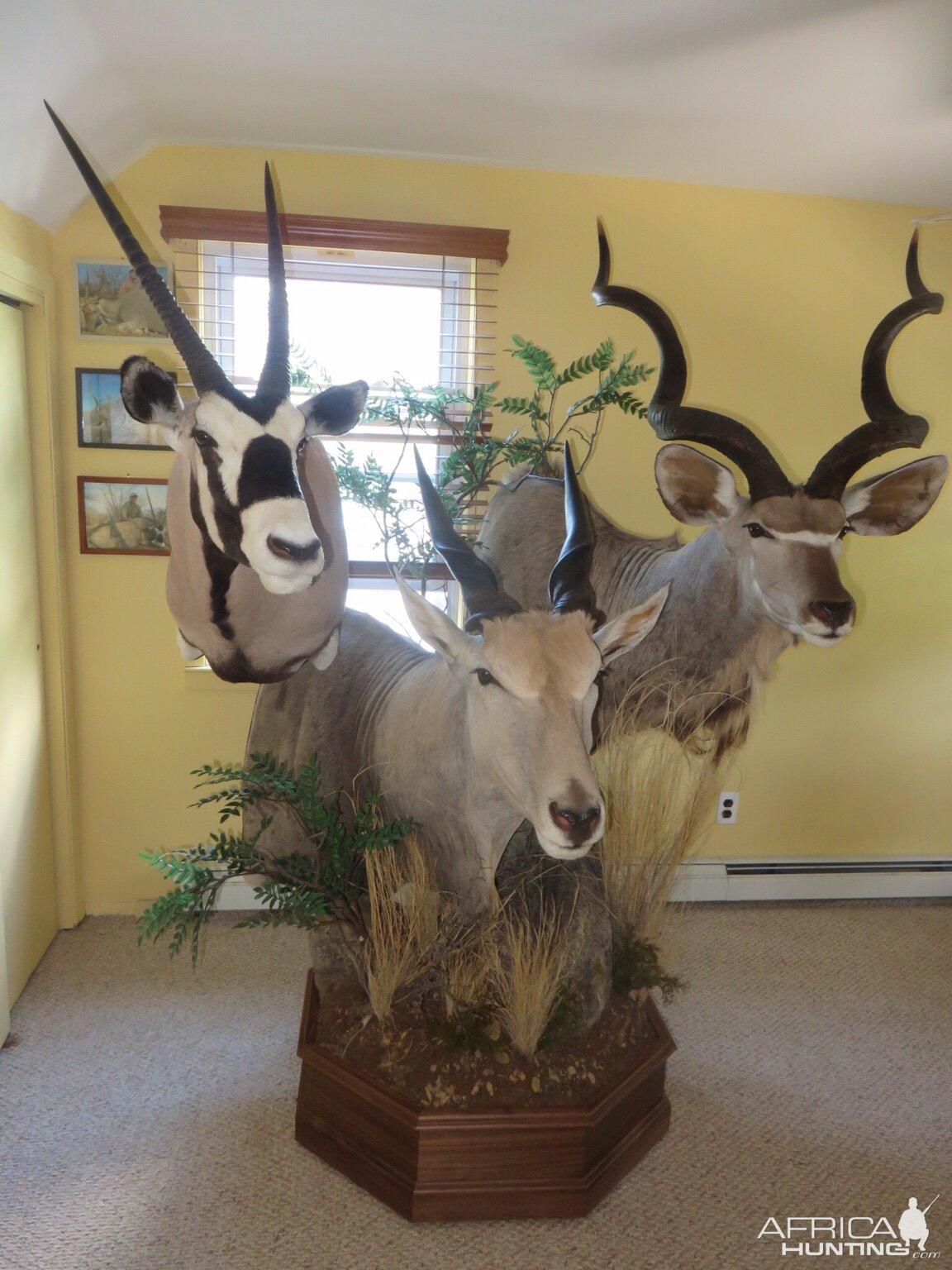 Gemsbok Eland Amp Kudu Pedestal Taxidermy Hunting