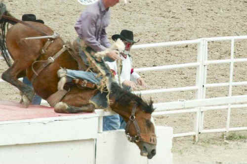 The Animal Hell That Is The Cheyenne Frontier Days Rodeo
