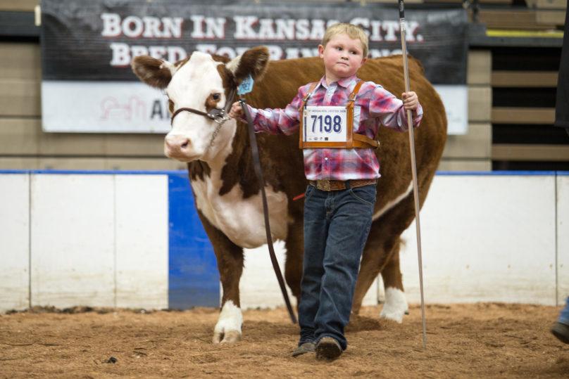 Livestock Show American Royal
