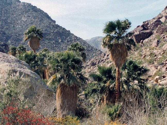 HD Decor Images » Southwest USA Landscapes   Deserts Anza Borrego Desert State Park