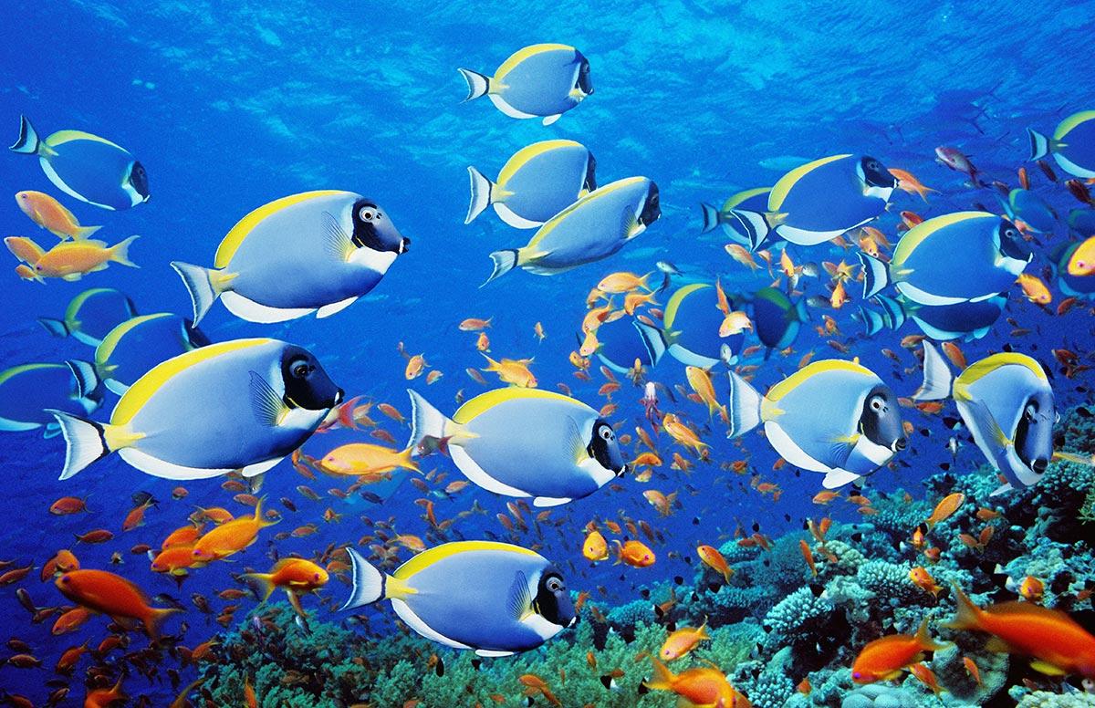 Aquarium Plants Online