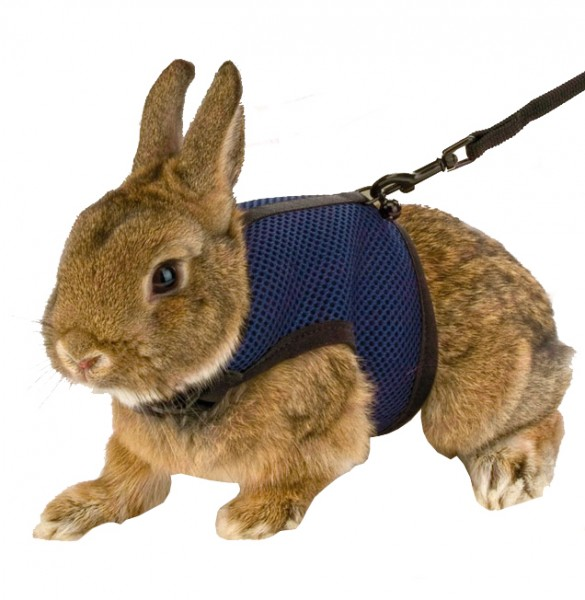 HARNAIS   LAISSE POUR LAPIN NAIN   COSY     Animaloo     HARNAIS   LAISSE POUR LAPIN NAIN   COSY