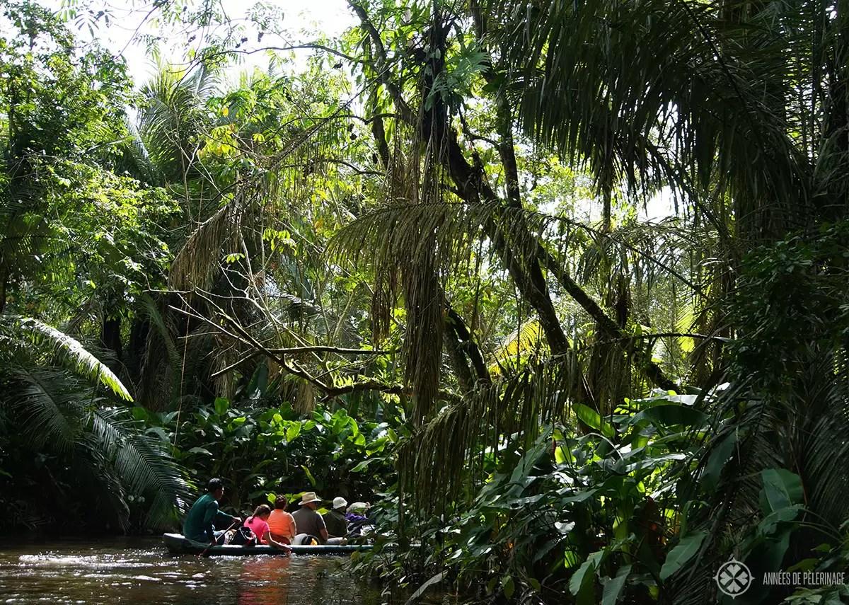 amazon rainforest location - HD1200×855