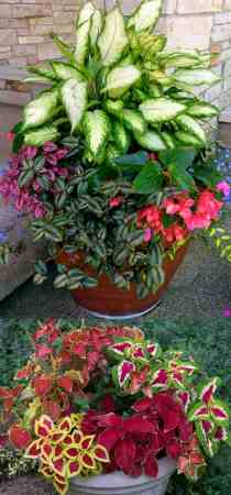 Colorful Flower Gardening in Pots   38 Designer Plant Lists for Each     How to create beautiful shade garden pots using easy to grow plants with  showy foliage and