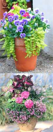Colorful Flower Gardening in Pots   38 Designer Plant Lists for Each     Country style flower gardening