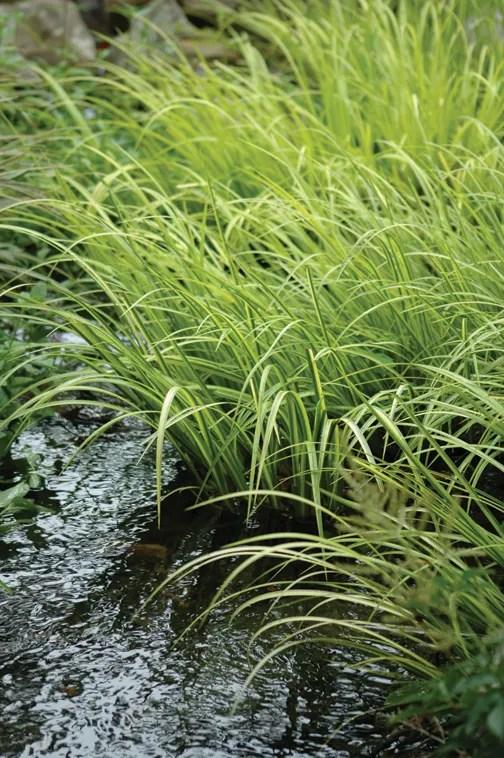 Aquatic Plants Small Ponds