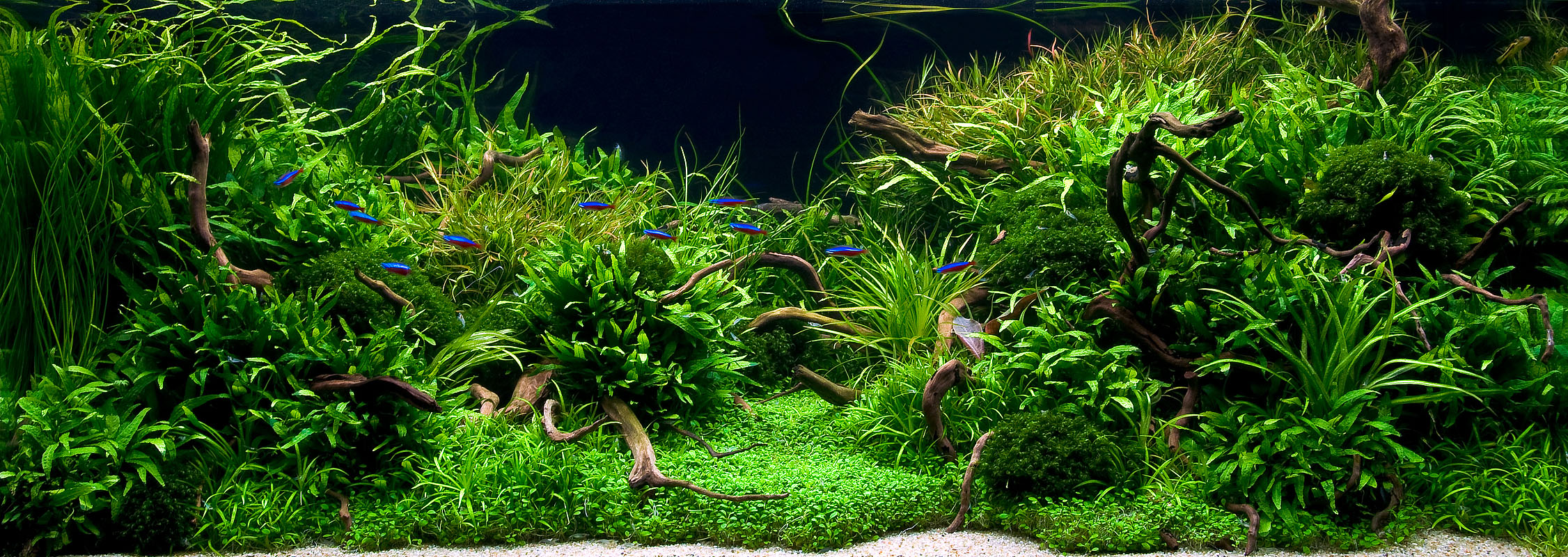Aquarium Plants Near Me