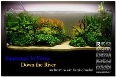 Aquascape in Focus: Down the River | AquaScaping World Forum
