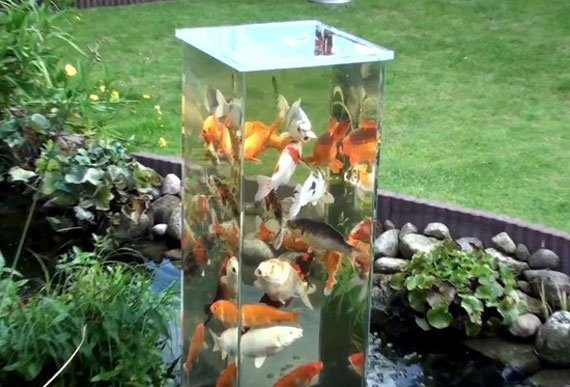 Mini Koi Pond Design