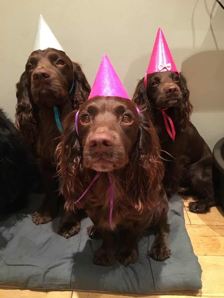 Dog Lover Celebrates Pooches Third Birthday With Friends