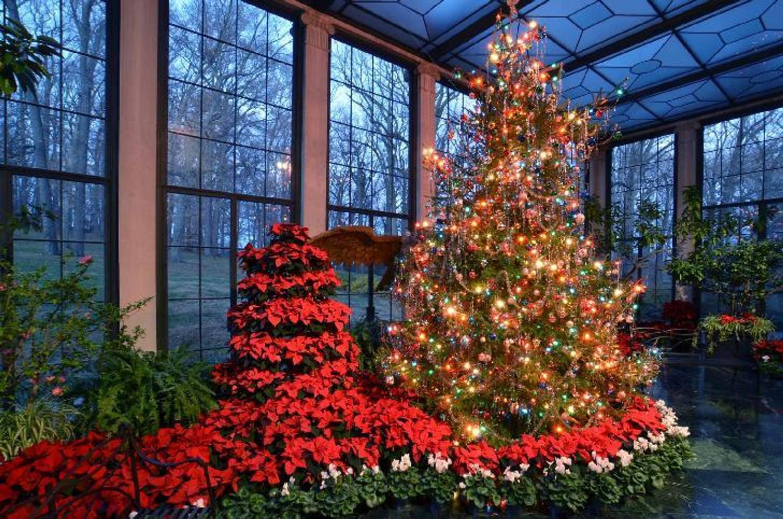 Native Tree Christmas American Top