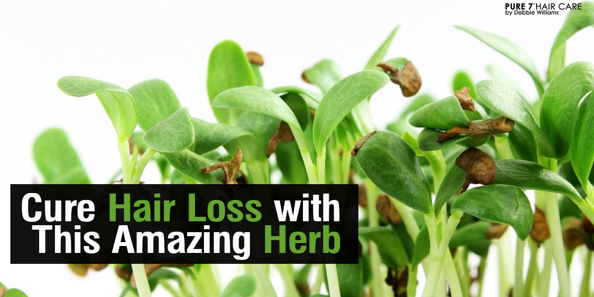 Cure Hair Loss With This Amazing Herb  Grow Your Hair Back Naturally CURE HAIR LOSS WITH THIS AMAZING HERB   ask debbie about hair