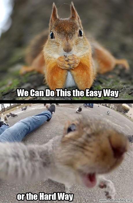 Squirrel Memes Funny